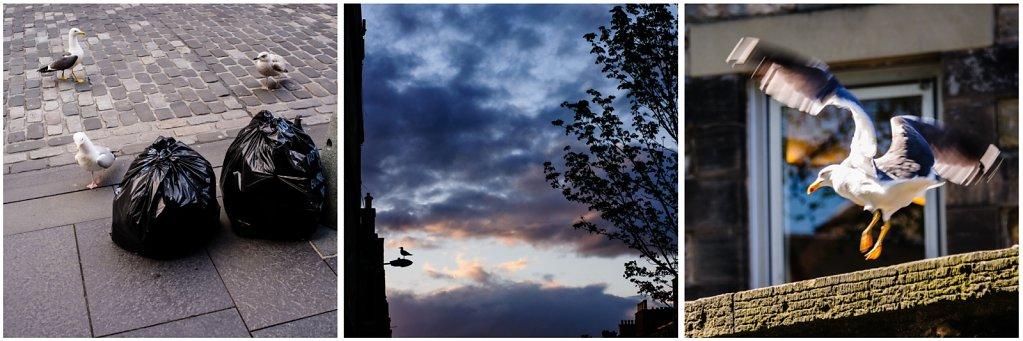 2012-Edinburgh-Moewen.jpg