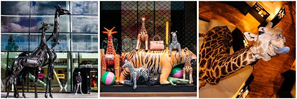 2012-Edinburgh-Giraffen.jpg