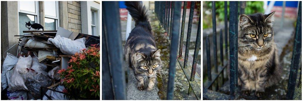 2012-Edinburgh-Katzen.jpg